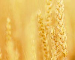 Adesco celebrates 10 years in the Irish agri-feed sector
