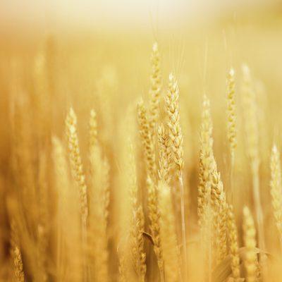 Grain/Bean Processors